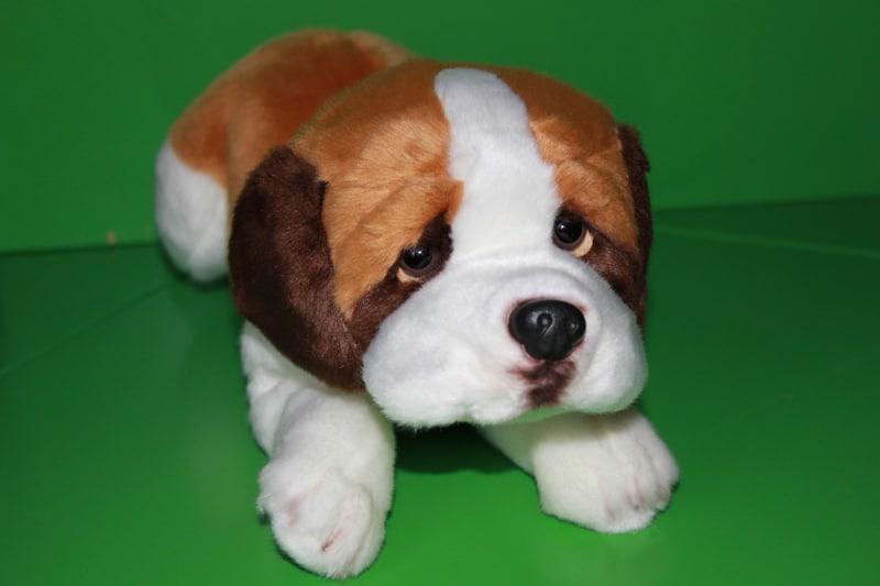"""Pierwszy """"Pies Bezdomniaczek"""" ma już swoich małych opiekunów :-)"""