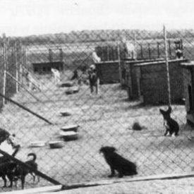 Pierwsze psy