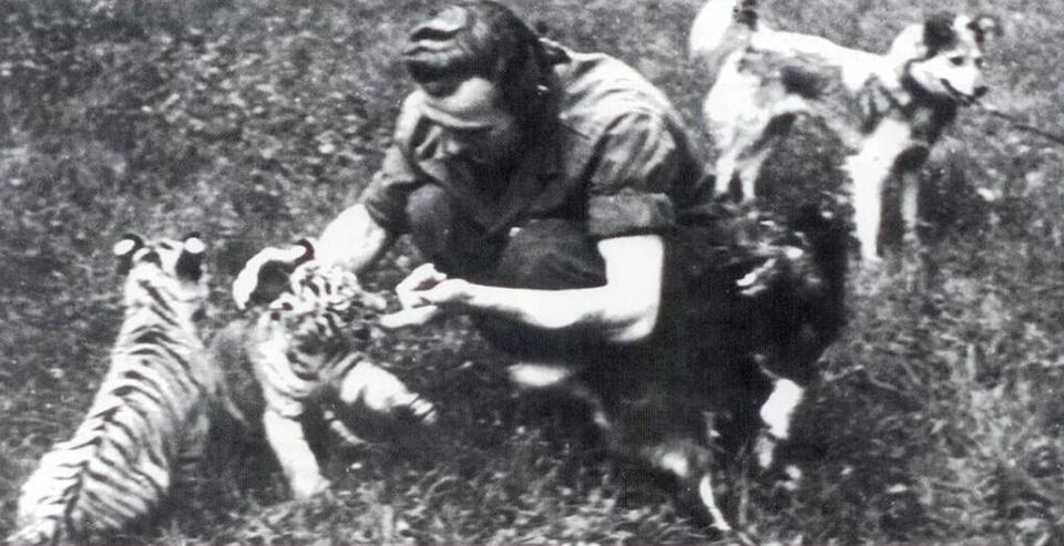 Suka z tygrysiątkami