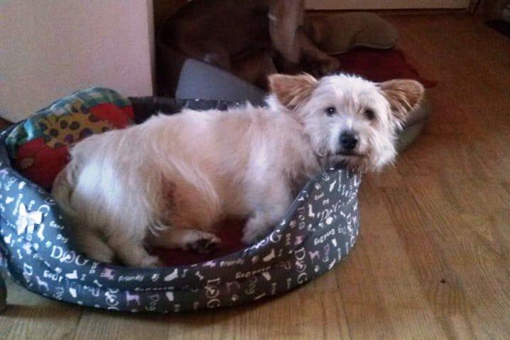 Toffi – pies, który jeździł MPK