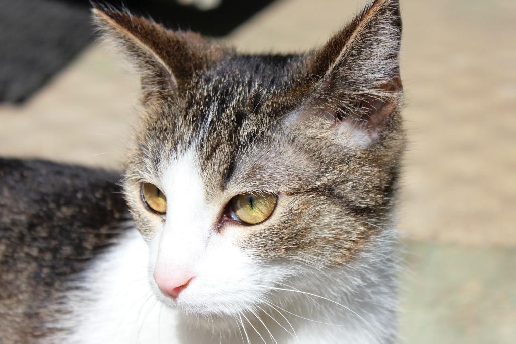 Dodatkowe pieniądze na sterylizacje wolno żyjących kotów