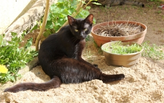 czarny kot odpłatność