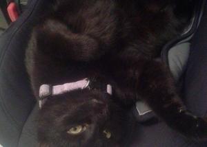 kot w foteliku 1