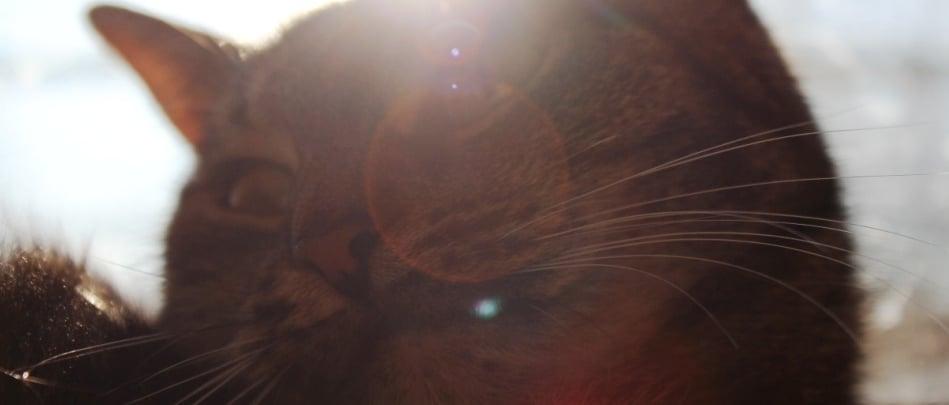 dzień-kota-slider