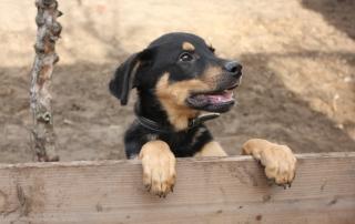 horacy pies do adopcji