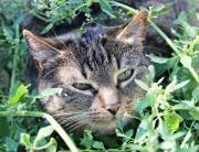 kot w zieleninie