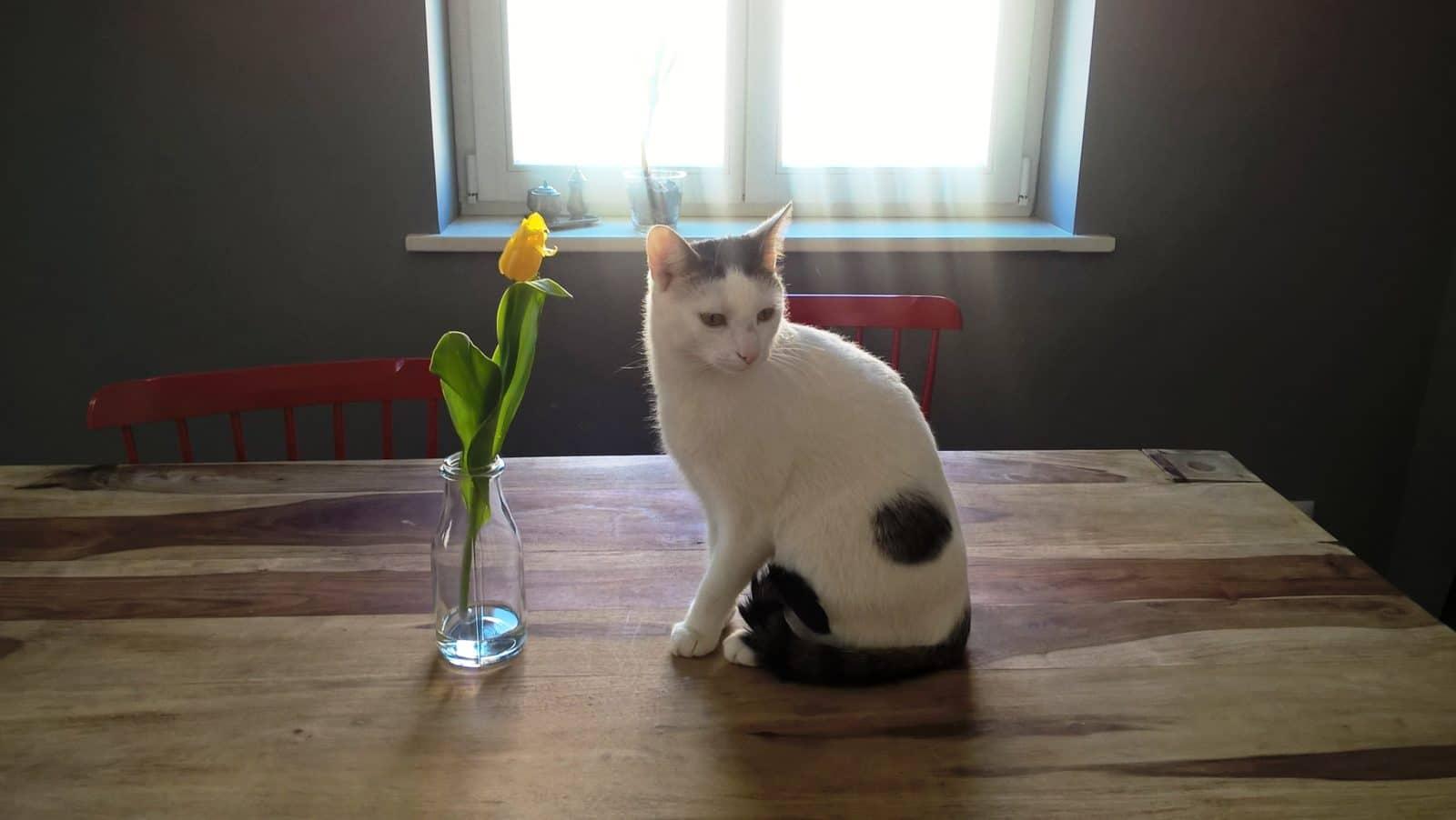 Dlaczego kot drapie kanapę?