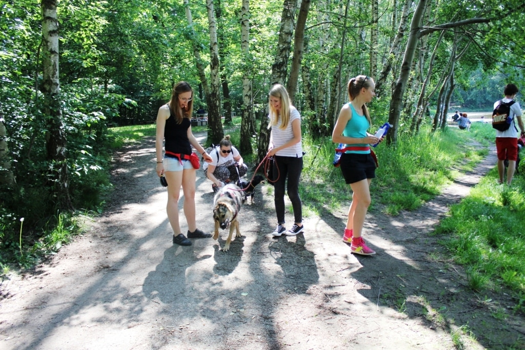 Dwa spacery z psami w czerwcu!