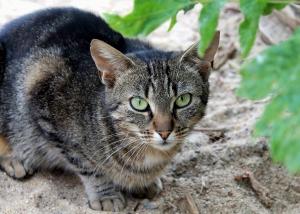kot do adopcji hania 2