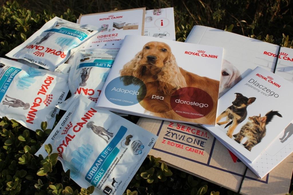 Wyprawki dla adoptujących psy