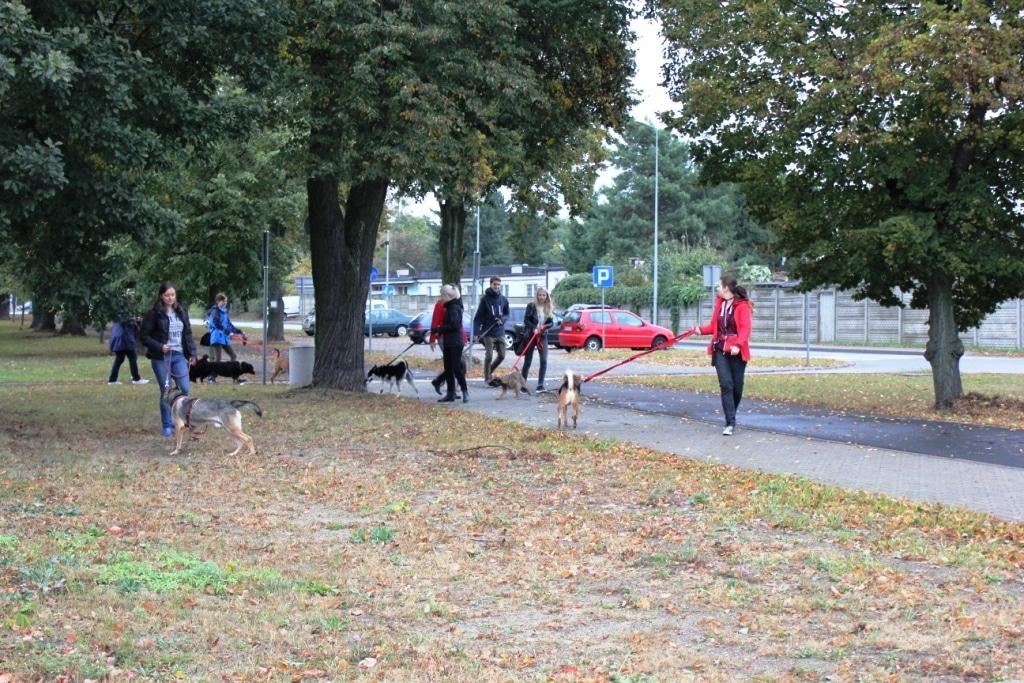 Październikowy spacer z psami