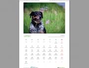 kalendarz ciapek