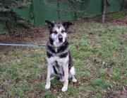 pies do adopcji Gucio2 (Custom)