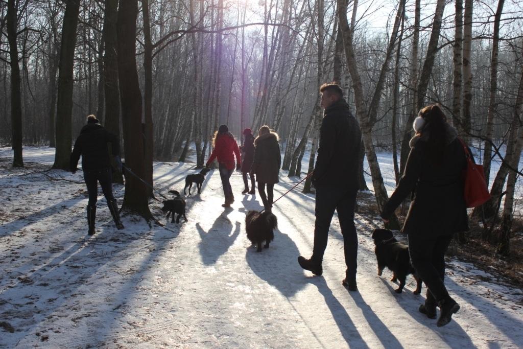 Styczniowy spacer z psami