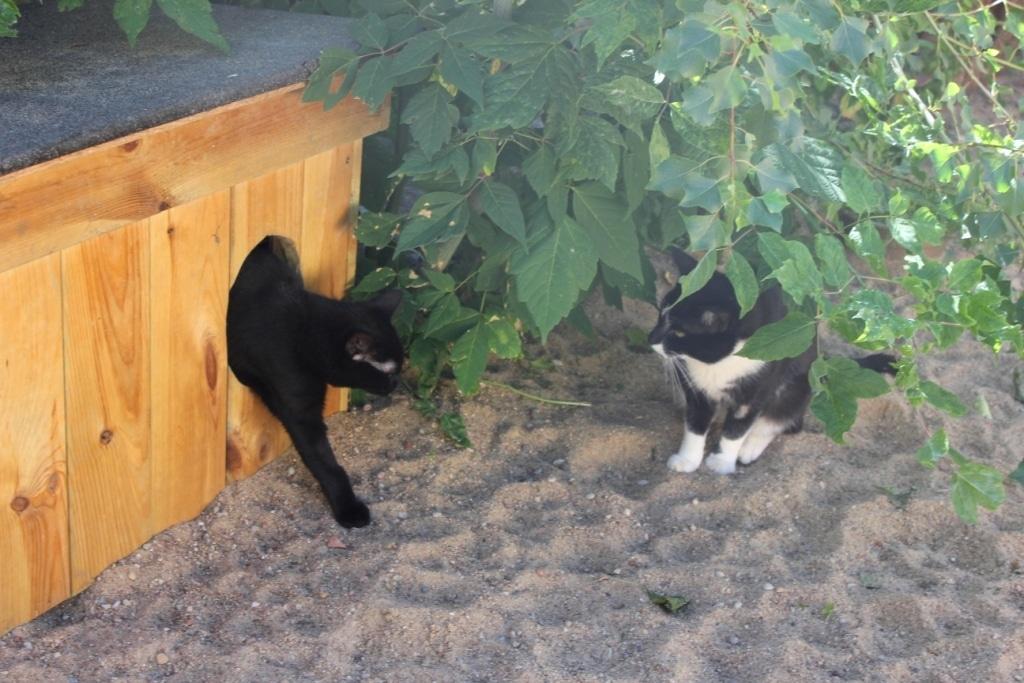 Sterylizacje wolno żyjących kotów