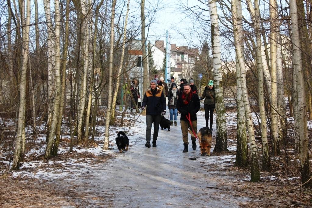 Lutowy spacer z psami