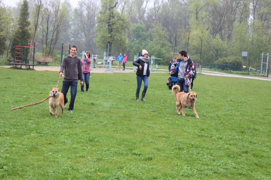 Majowy spacer z psami