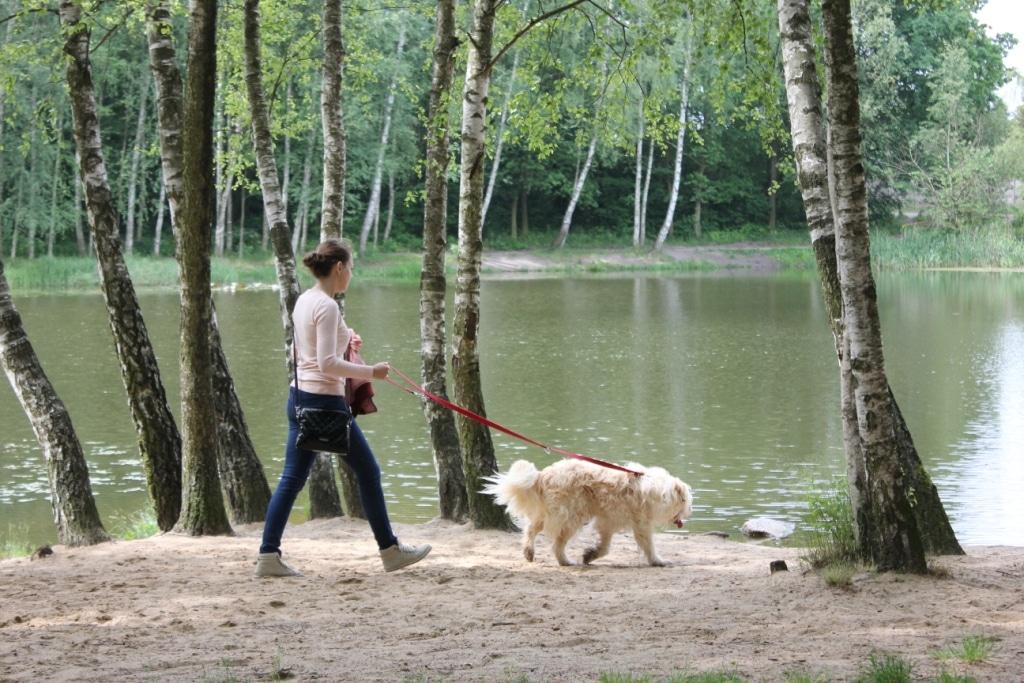 Zapraszamy na spacer z psami