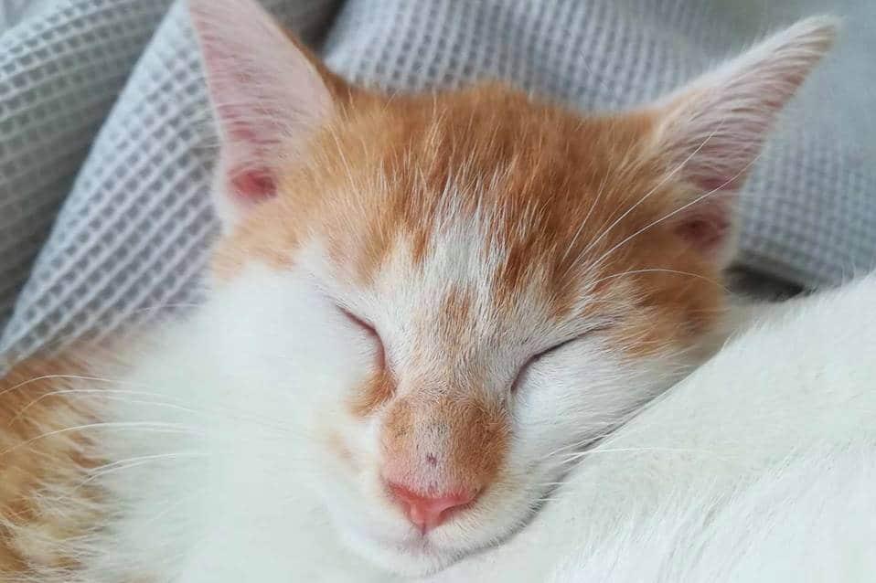 Szukamy domów tymczasowych dla kociaków