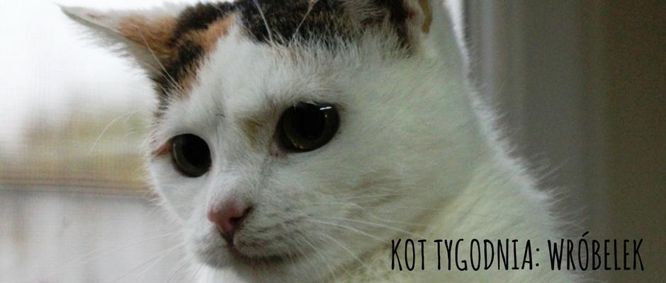 kot-tygodnia-wróbelek