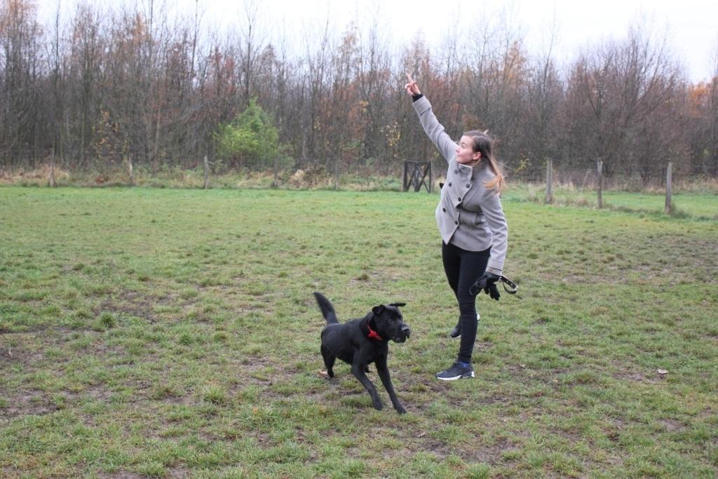 Listopadowy spacer z psami