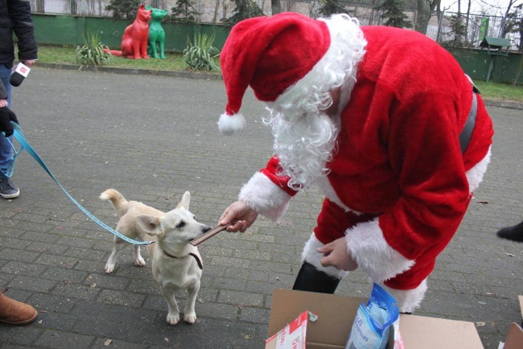 Mikołaj w schronisku