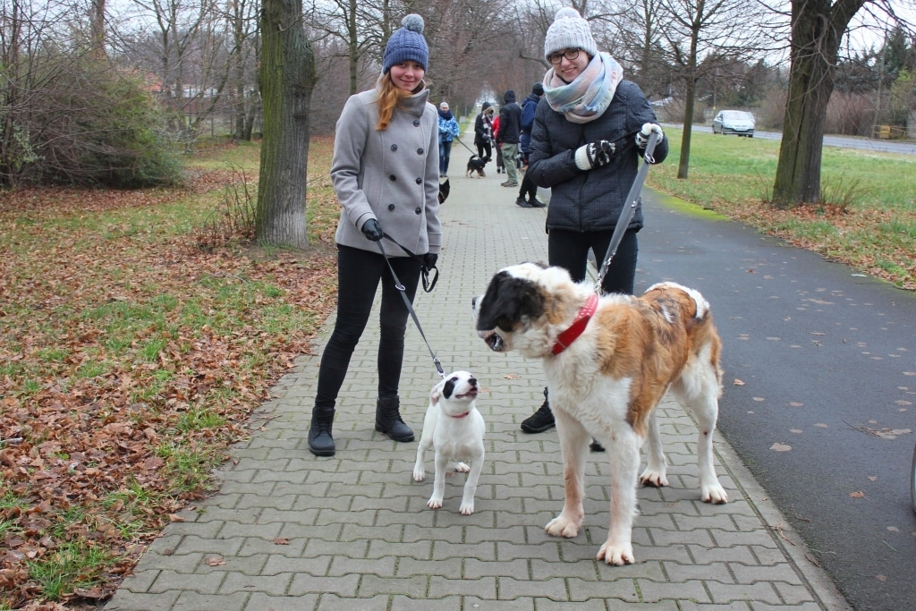 Grudniowy spacer z psami