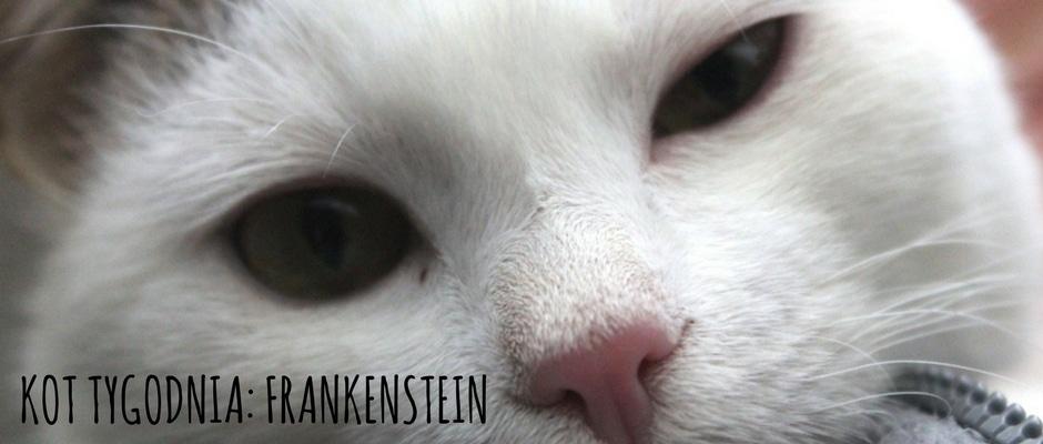 kot-tygodnia-frankenstein