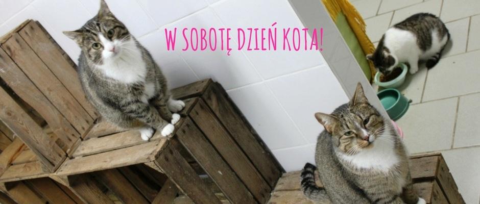 slider-dzień-kota