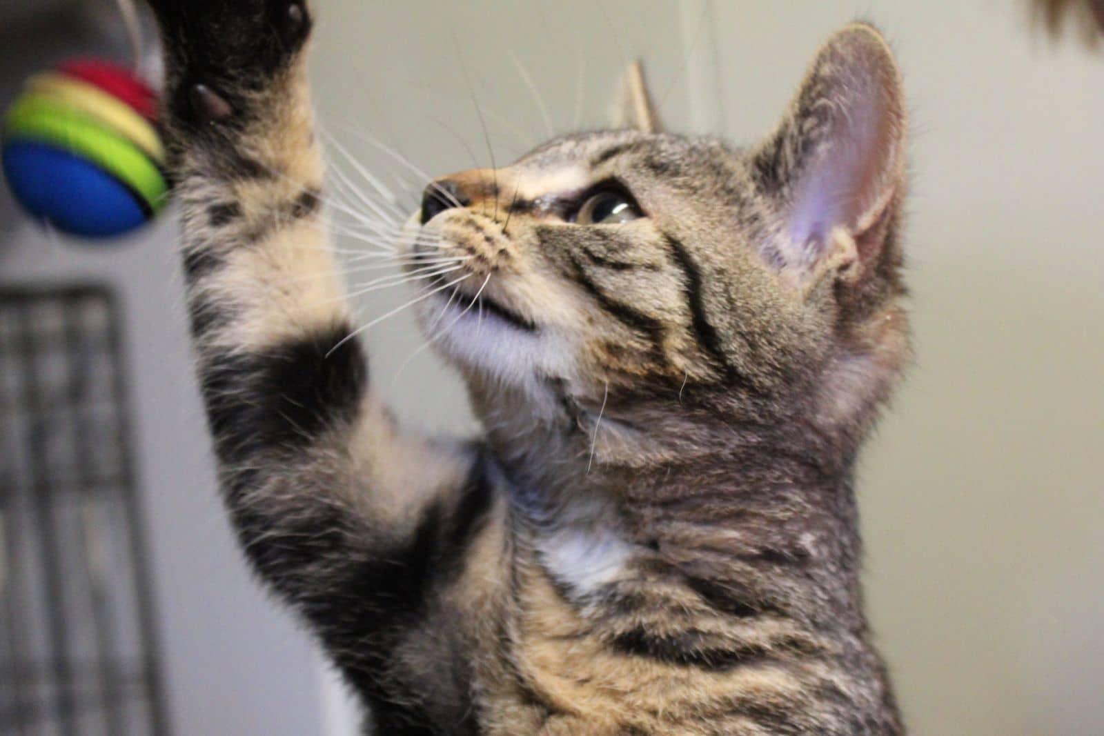 Zatrudnimy opiekuna/opiekunkę kotów