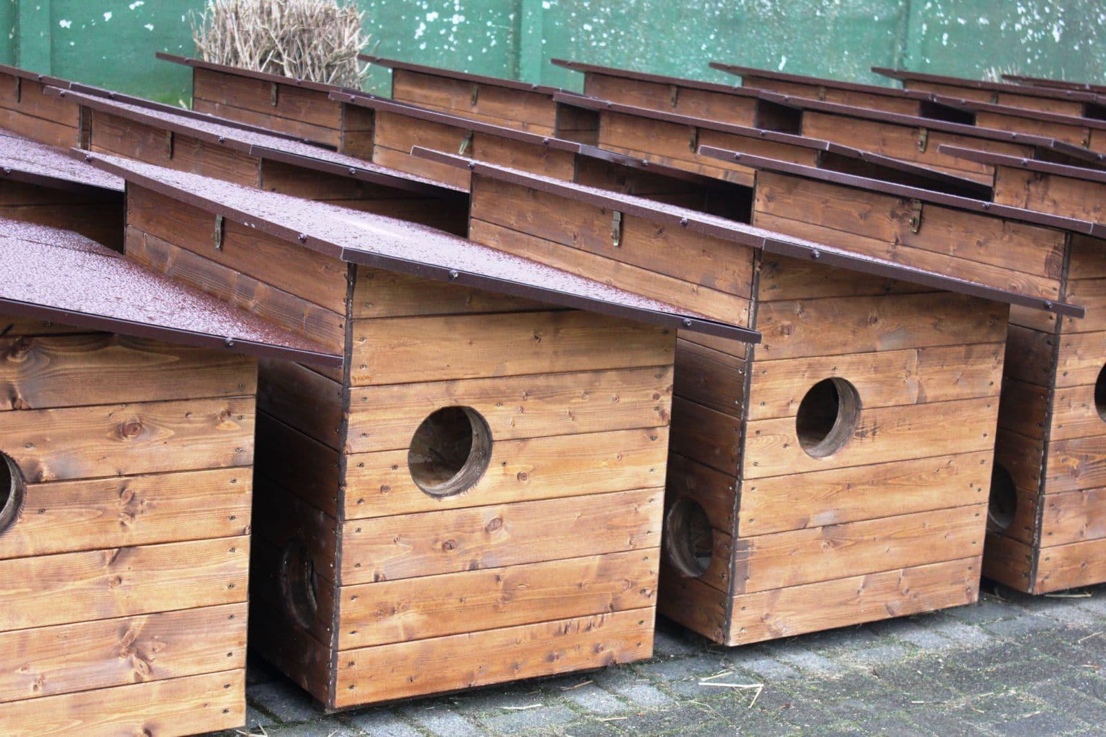 Gdzie postawić domki dla kotów?