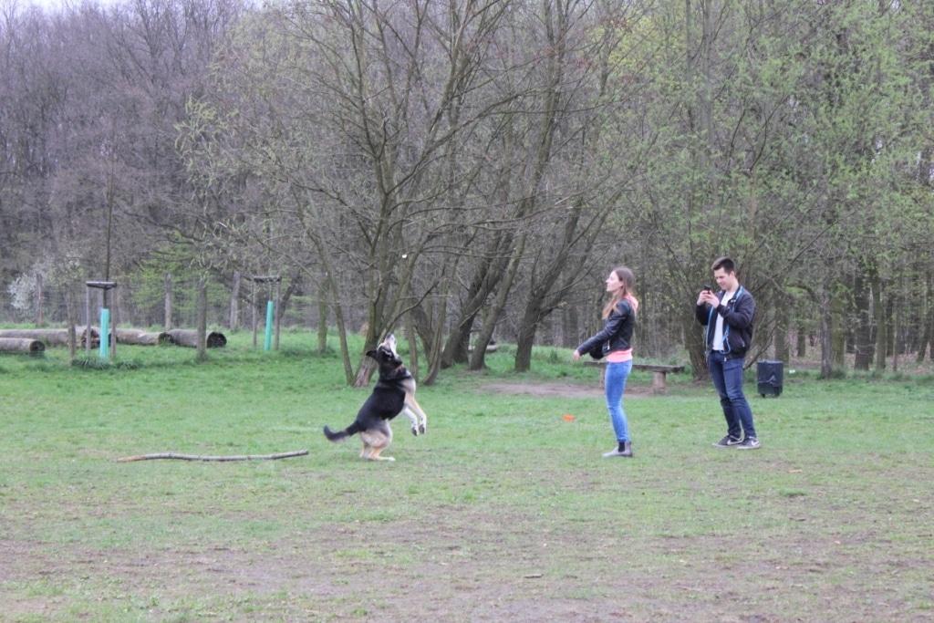 Kwietniowy spacer z psami