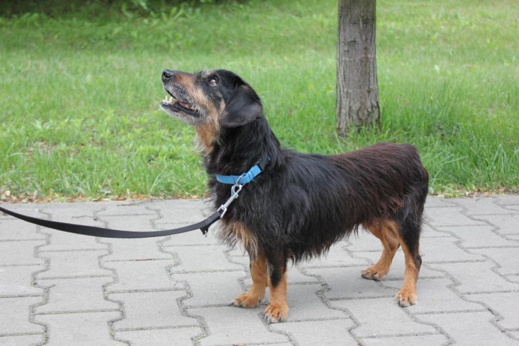 Akcja Smycz dla psiaka