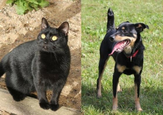 Jak pies z kotem – spotkanie